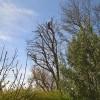 Billede af en træbeskæring i enskov.