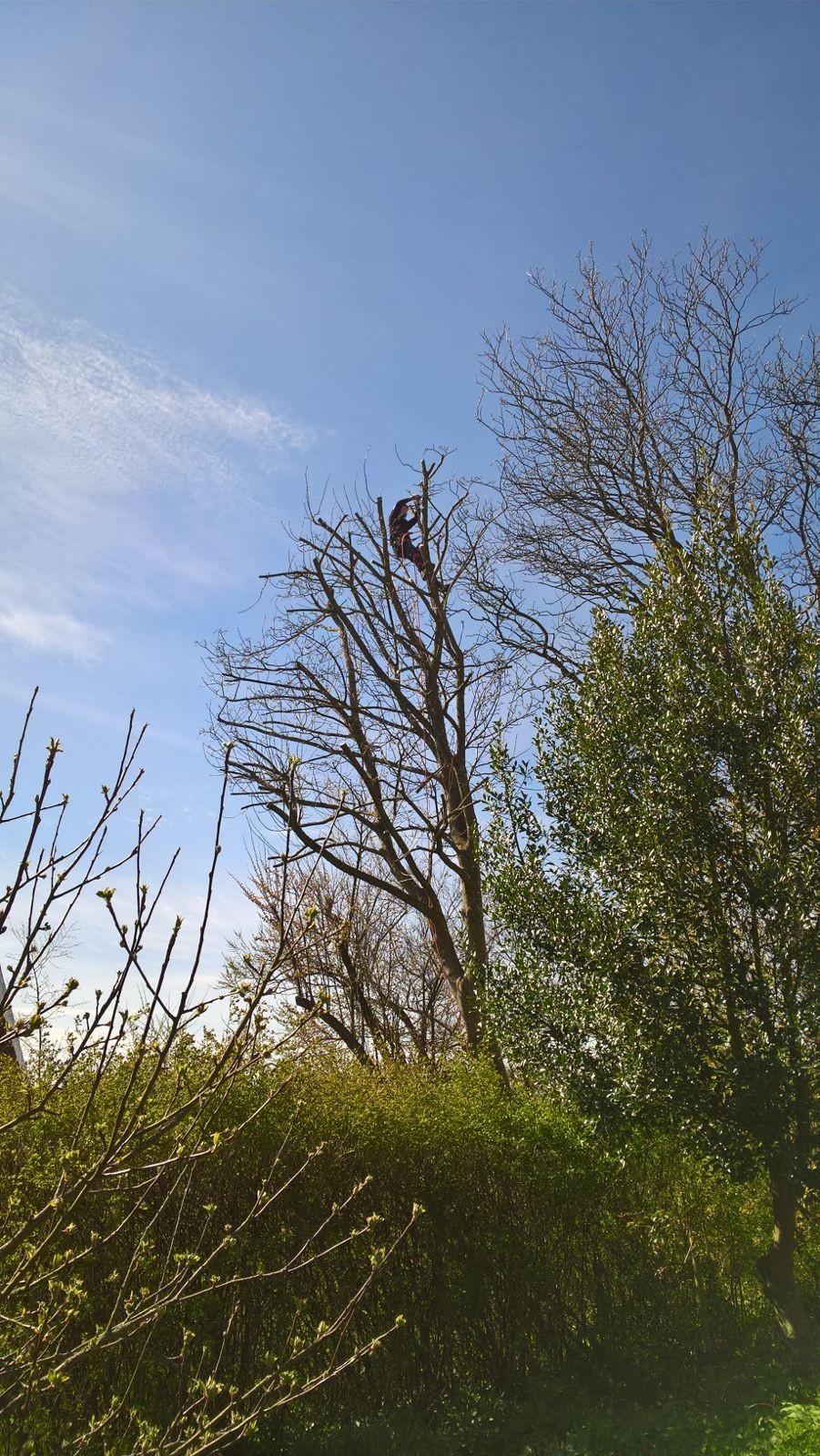Billede af en træbeskæring i en skov.